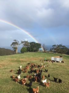 Very free-range chooks